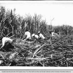 Oahu Sugar Strike