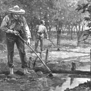 Inmigrantes chinos que trabajan en la agricultura